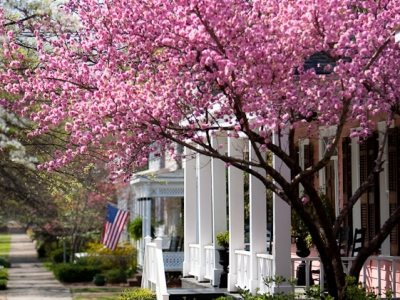 Cherry blossoms, Columbus, Georgia