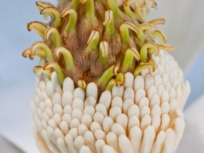 Tower of Jewels, Magnolia flower