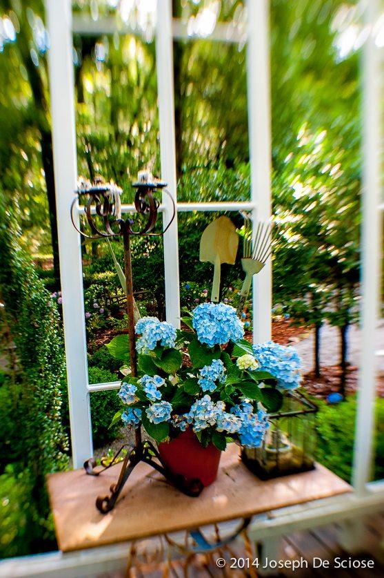 Hydrangeas, garden