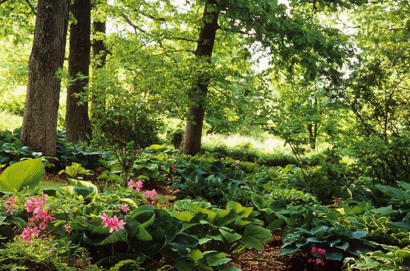 Iowa City shade garden