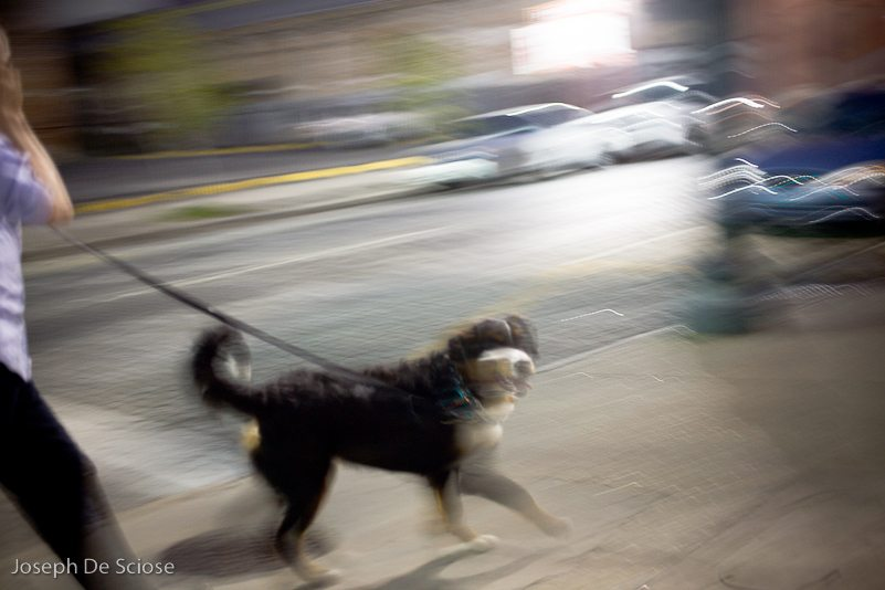 Blurry shot of a dog being walked on a leash in New Orleans.