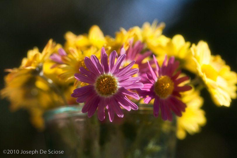 Zinnias Bouquet