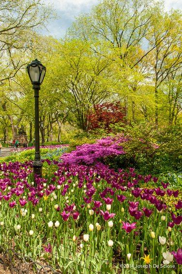 Central Park Spring Vignette