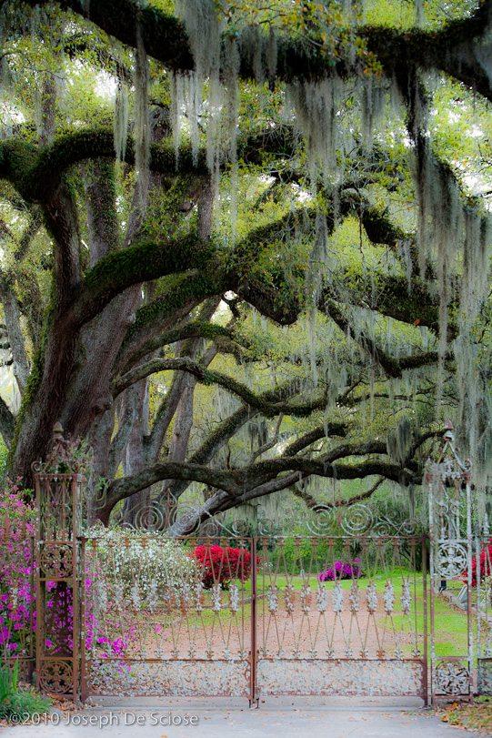 Cemetery gates, St Francisville, Louisiana