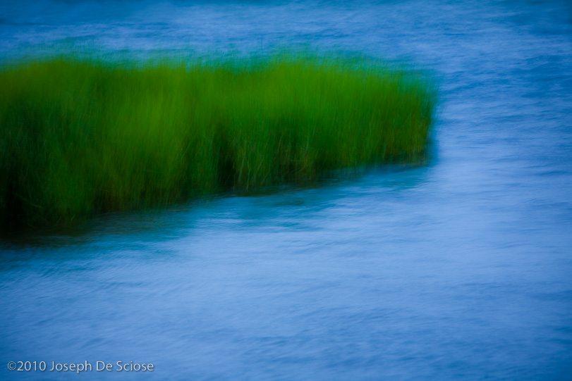 Marsh grass, North Carolina