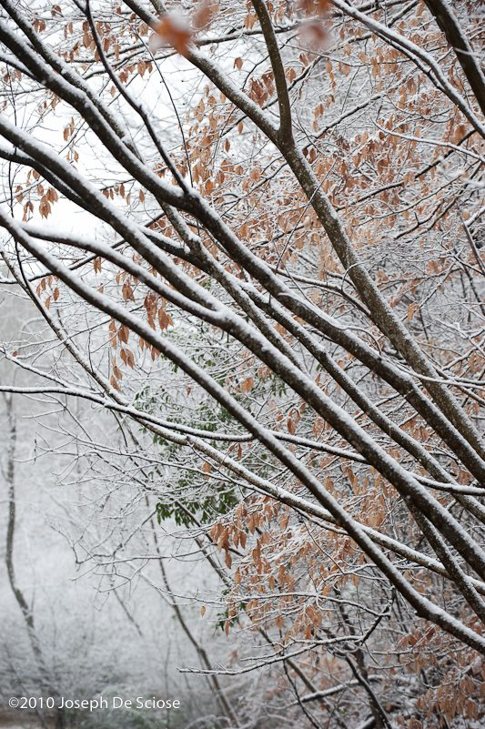 Snow on trees and shrubs, winter, cold, photograph, Joseph De Sciose, shapes, texture
