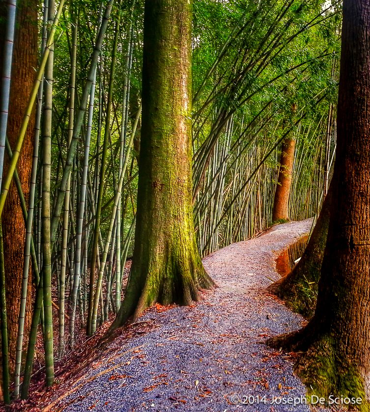 Path in a Bamboo Foresst