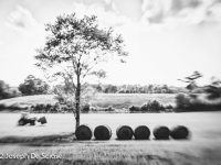 Rolled bales of freshly cut hay in northern Alabama.