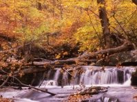 Forest and stream, New York State, autumn color, photo