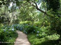St Francisville, Louisiana, Photograph Joseph De Sciose,