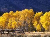 Yellowstone National Park, photo, Autumn, Photograph Joseph De Sciose
