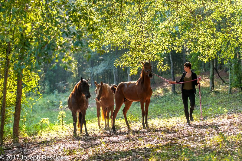 Young woman leading horses in a pasture