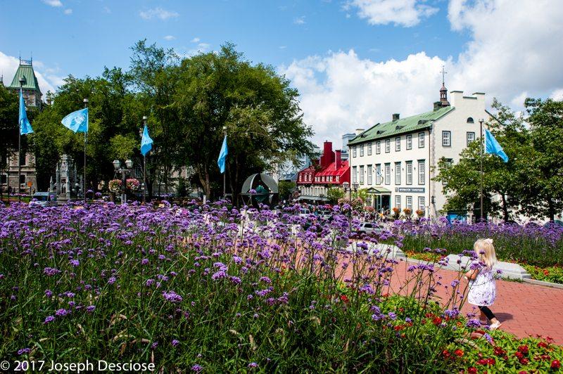 Quebec City, Verebena bonarienses, garden