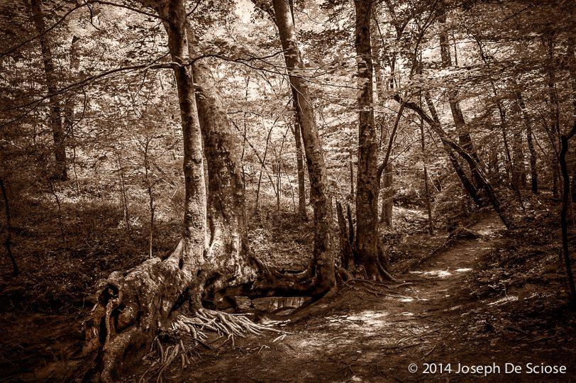 Moss Rock Preserve,