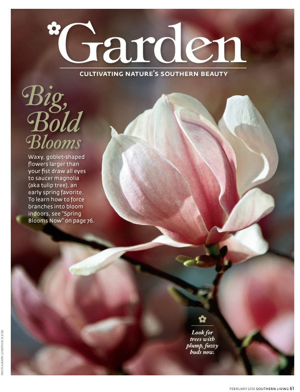 February 2010, Southern Living Magazine, Magnolia flower