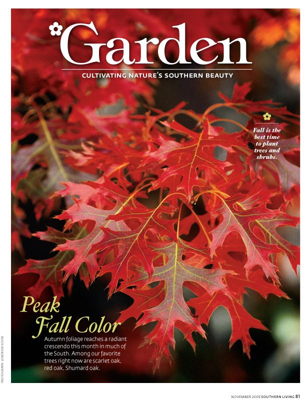 Southern Living Magazine, November 2009, Red Oak leaves