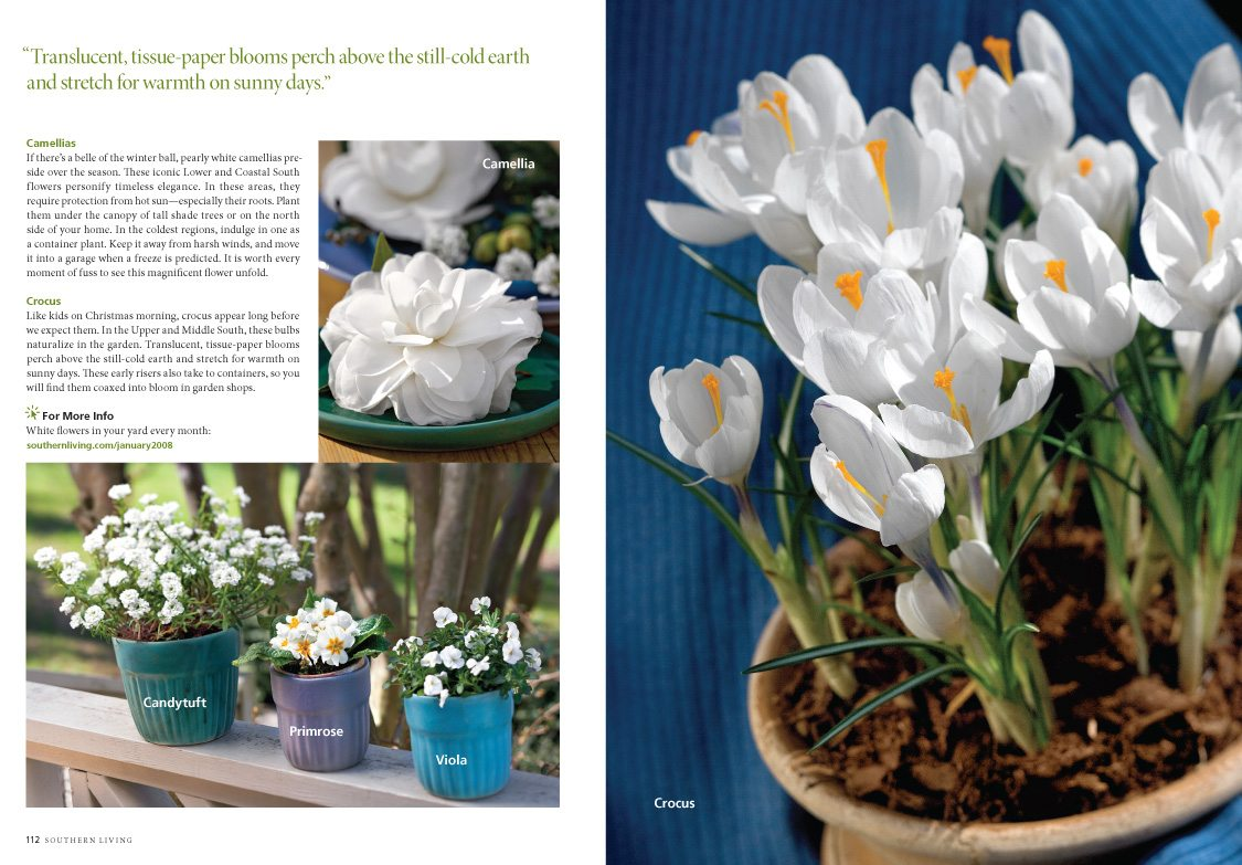 Winter Whites, Southern Living Magazine, January 2008