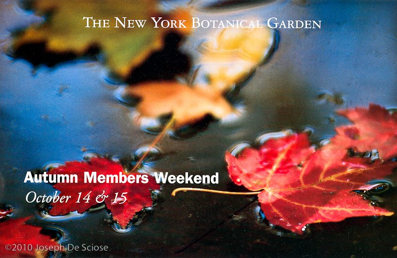 New York Botanical Gardens card.