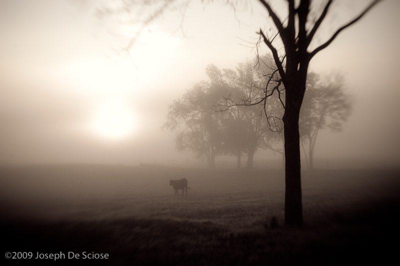 Photo, North Alabama, October morning, Lens Baby