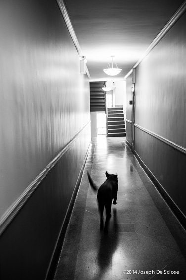 Dog in the Hall