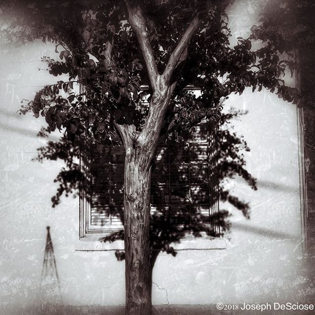 Crape myrtle #commercialphotography #alabama #photographer #landscapephotography #design #tree #shadows #wall  #architecture