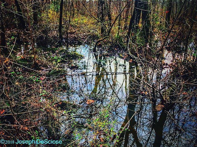 Swamp scene #commercialphotography #alabama #editorialphotography #fineartphotography #water #trees #landscapephotography #reflections #wet #winter #montevallo