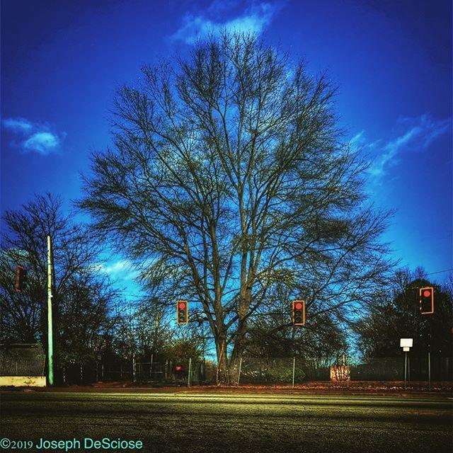 Stop & grow #commercialphotography #editorialphotography #atlanta #tree #blue #sky #trafficlights #urban #fineartphotography #desolate #winter #noperson