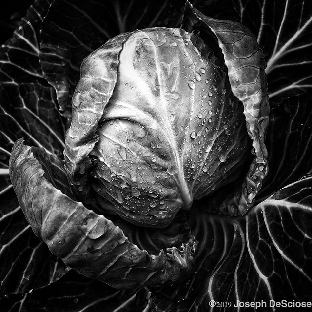 Veins #fineartphotography #commercialphotography #geometric #chaos #vegetable #garden #edible #perfection #water drops #alabama