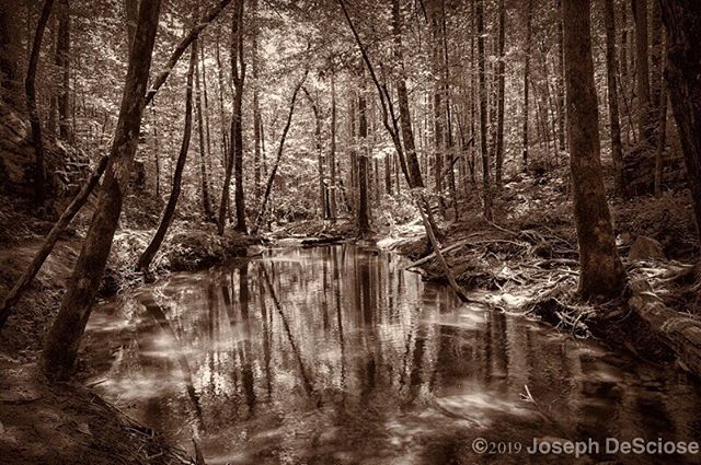 Fairy Pond #alabama #hoover #commercialphotography #fineartphotography #landscapephotography #interiordesign #decorativephotography #nature #peaceful #meditation #water #reflections #trees #native plants